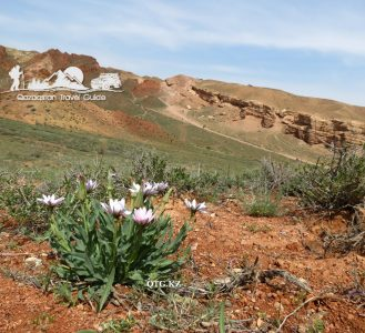 Flowers. Canyon Charyn «Valley of Castles». Kazakhstan.